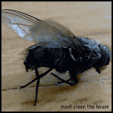 must clean the house, things are piling up too high, are misplaced and disorder and chaos own the day